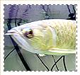 昆虫・その他動物魚写真
